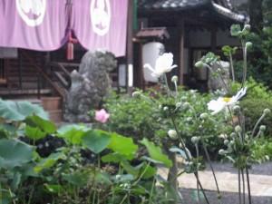 蓮と秋明菊